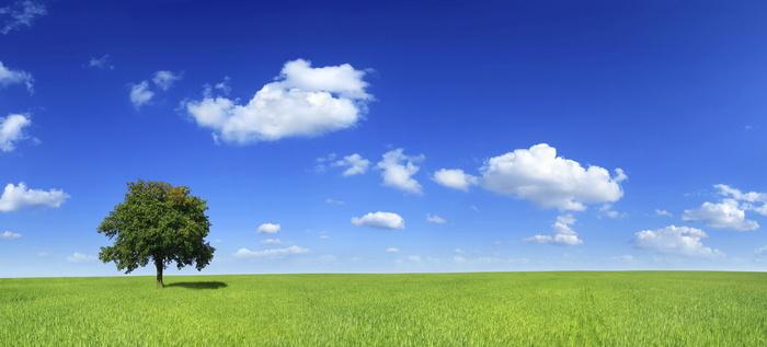 paisaje arbol y cielo azul